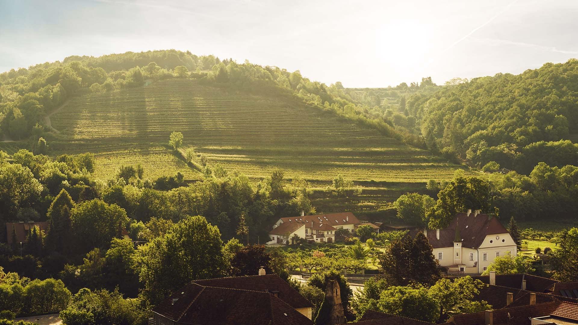 weinbaugebiet_kremstal_niederoesterreich_landschaft_sehenswuerdigkeit (3)